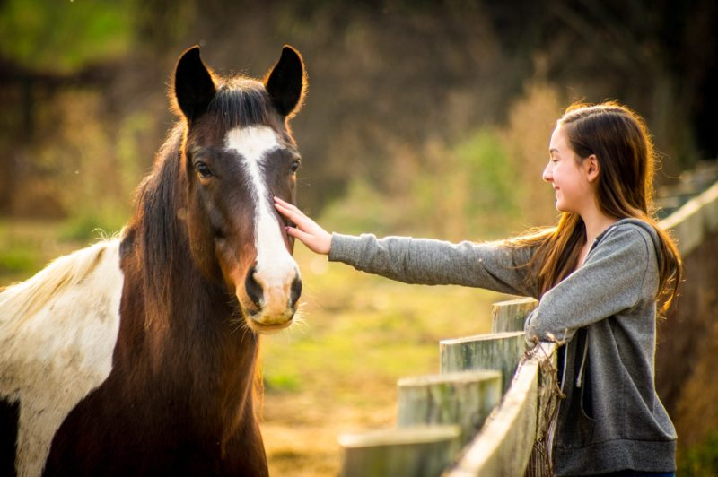 What is the Difference between a Quarter Horse and a Thoroughbred?