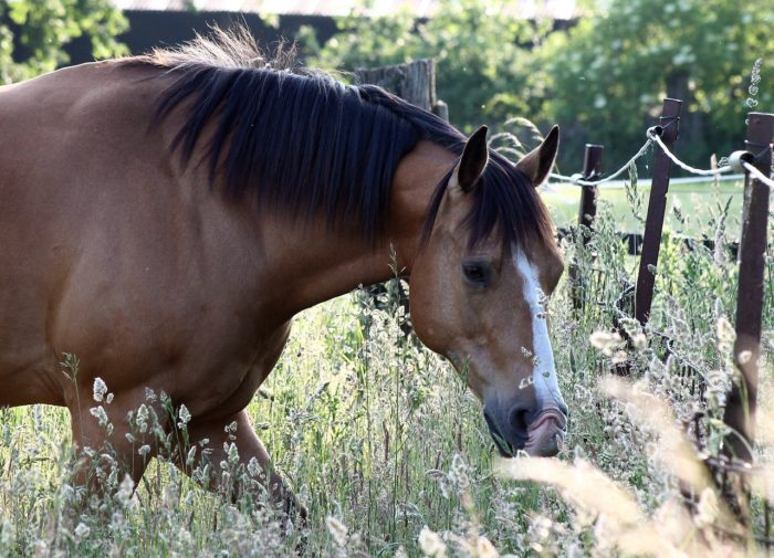 How Much Does an American Quarter Horse Weigh?
