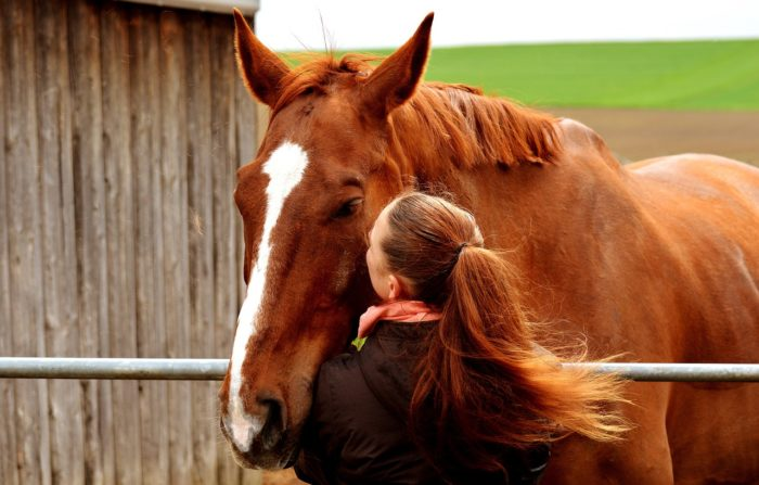 The Cost of an American Quarter Horse: Factors and Variations