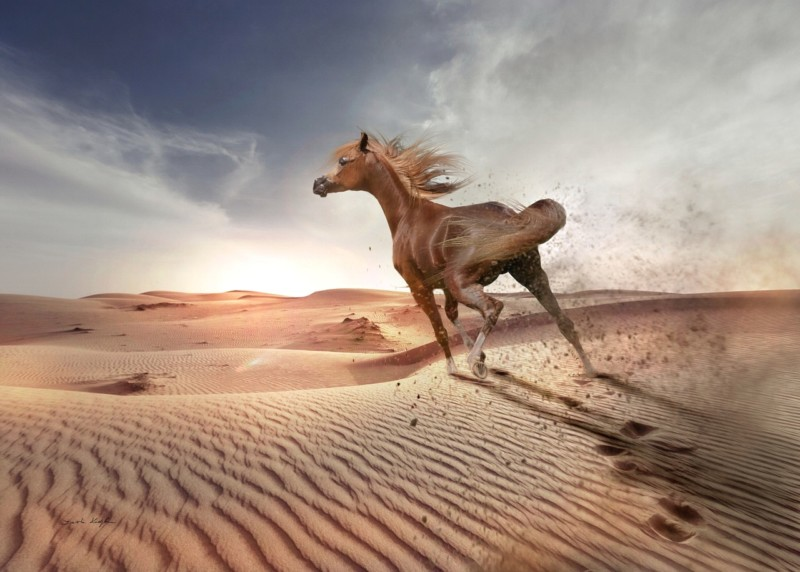 12 Facts About Arabian Horses That You Didn't Know