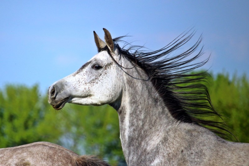 The Cost of An Arabian Horse…Why Are They So Expensive?