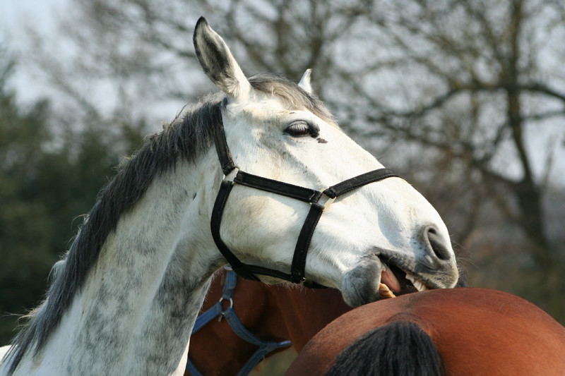The Ultimate Training Guide To Stop Horse Biting