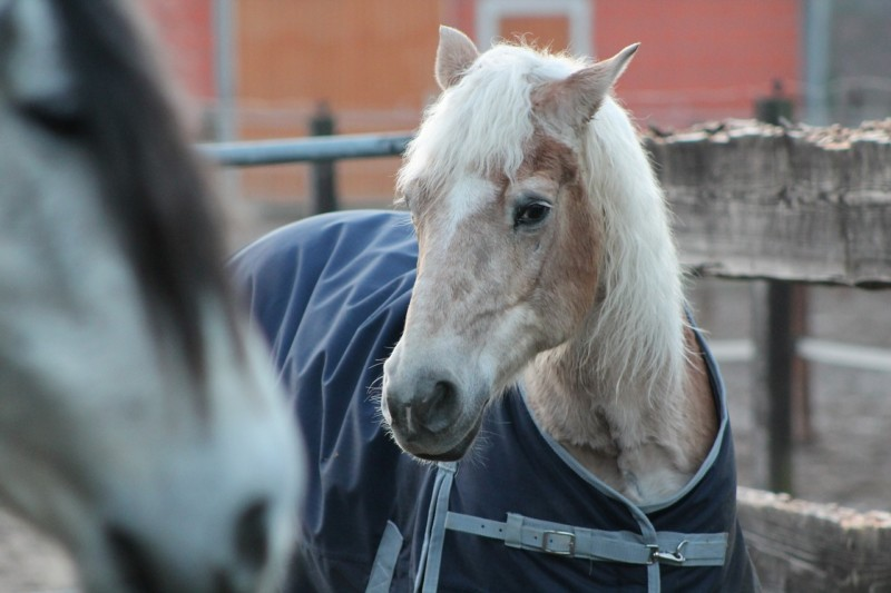 Do Horses Get Cold? Care Tips for Cold Horses