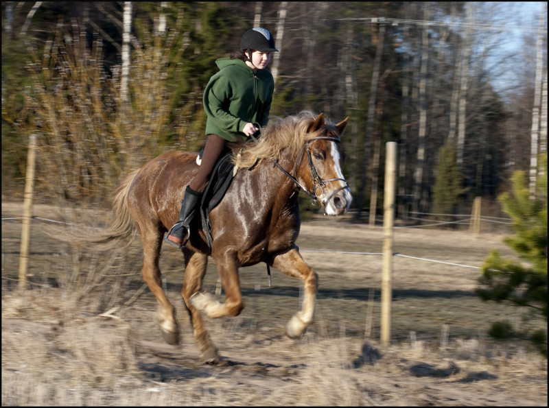 Do Horses Sweat? How Much Is Normal?