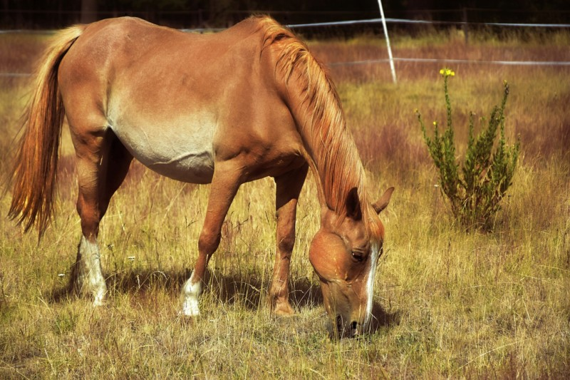 What Do Horses Eat? Horse Nutrition, Diet, Health Tips