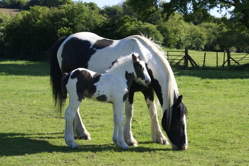 When Do Horses Stop Growing? Horse Growth Stages Explained
