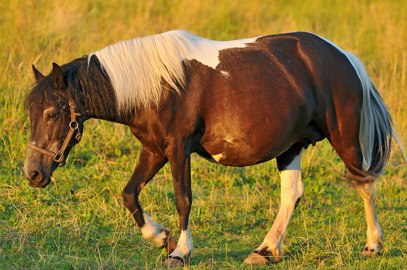 Horse Pregnancy: Signs, Stages, Timeline & Care